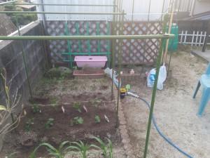 家庭菜園のカラス対策003