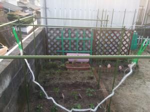 家庭菜園のカラス対策004