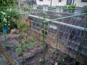 家庭菜園のカラス対策007