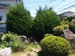 庭木の剪定!?008