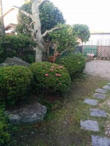 庭木の剪定!?011