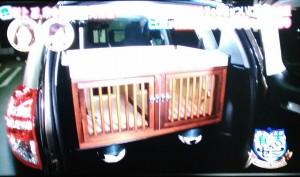 坂上忍の車に犬用のケージを作る017