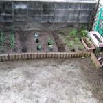 4種類のトマトと3種類のキュウリそれに耐病ピーマンの苗を買ってみた!