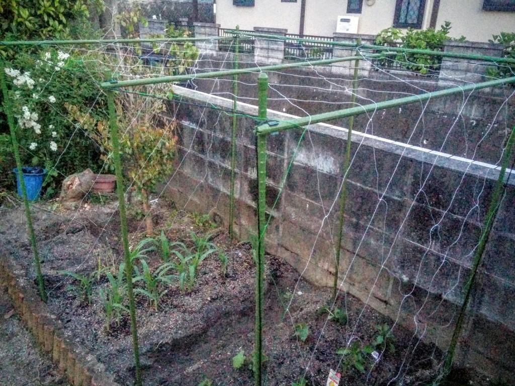 家庭菜園のカラス対策!キュウリネットを張ってみた