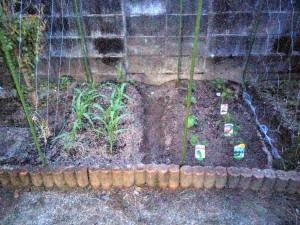 家庭菜園のカラス対策005