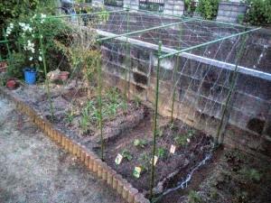 家庭菜園のカラス対策006