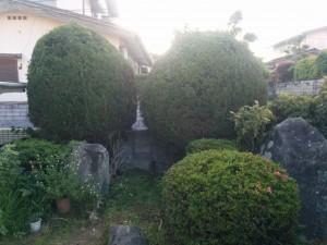 庭木の剪定!?009